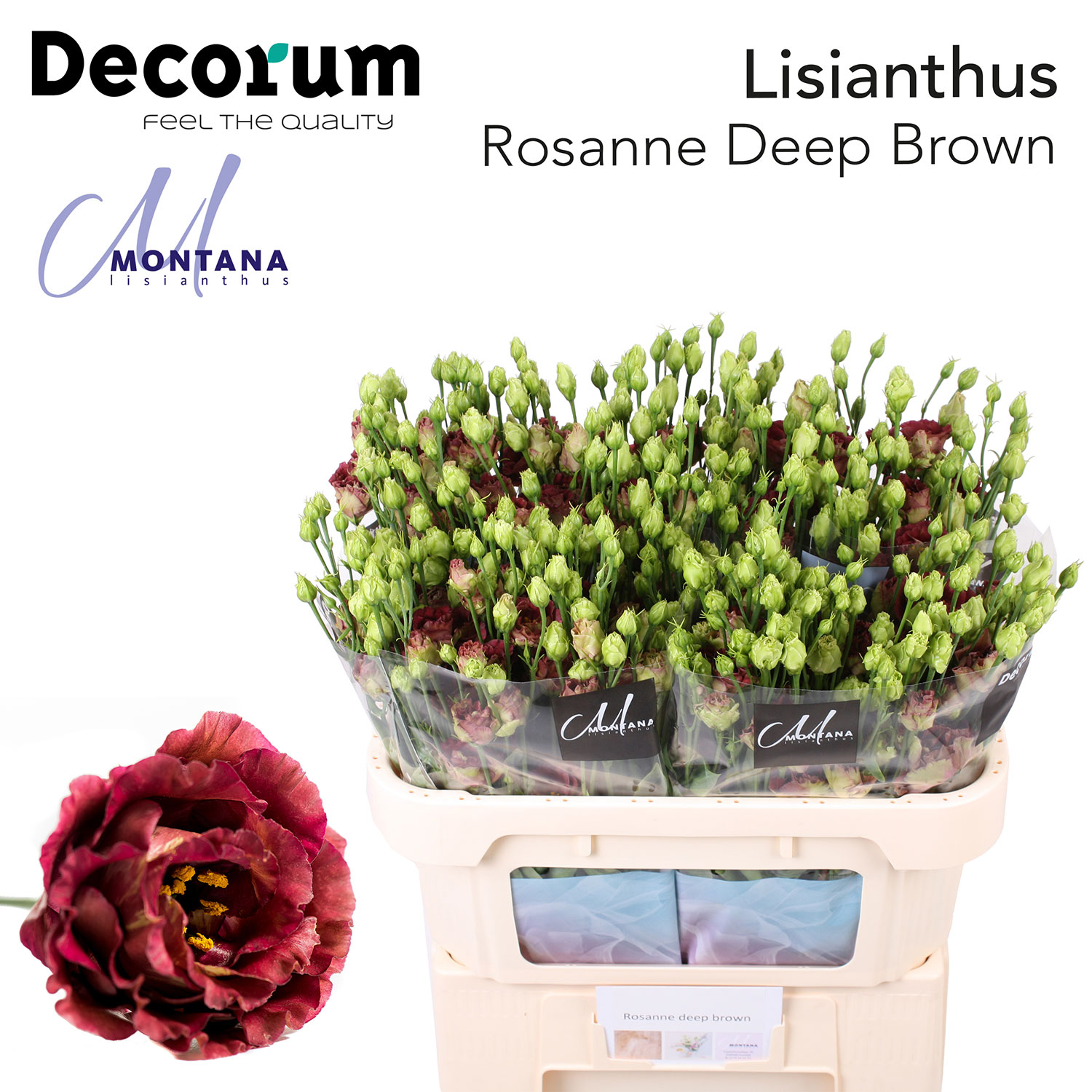 Rosanne Deep Brown 998